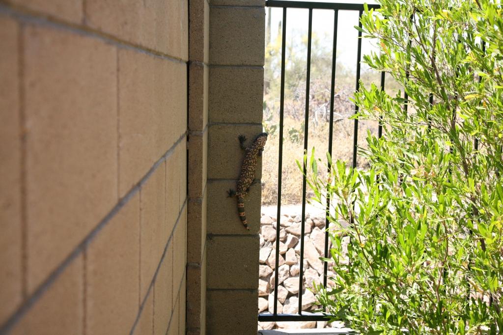 塀の欄干を登るヒラモンスター