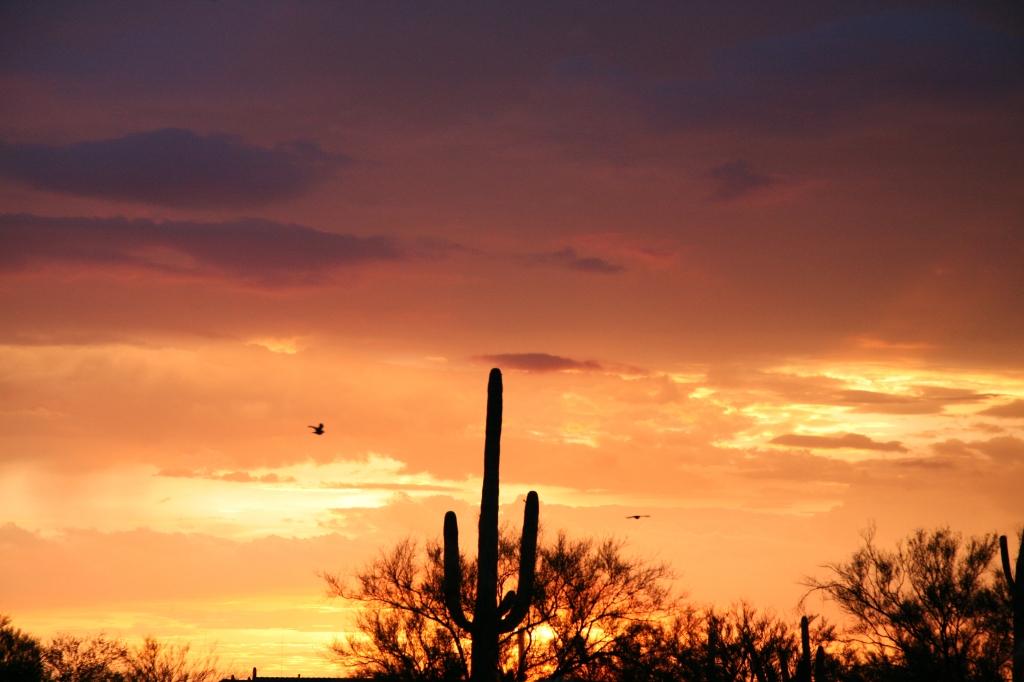 ヨタカが飛ぶ夕焼け空