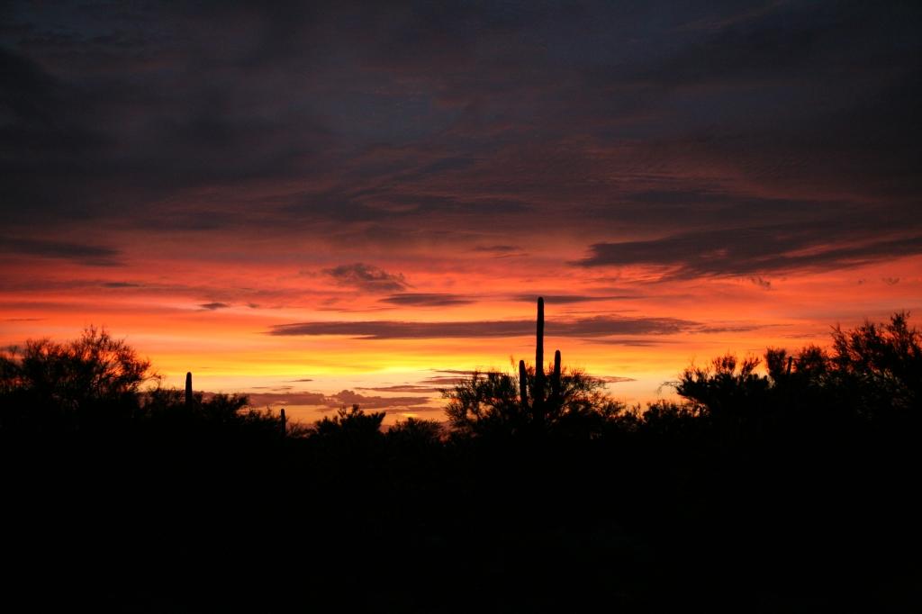 ソノラ砂漠の夕焼け空
