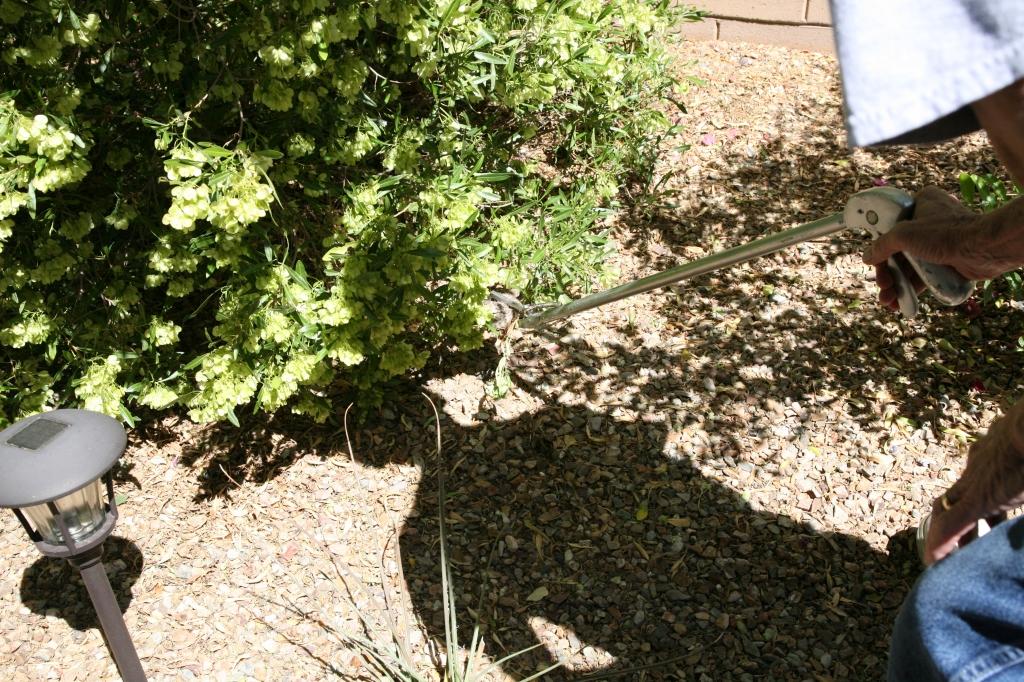 ガラガラヘビ捕獲器