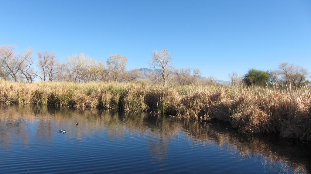 スイートウオーターの池