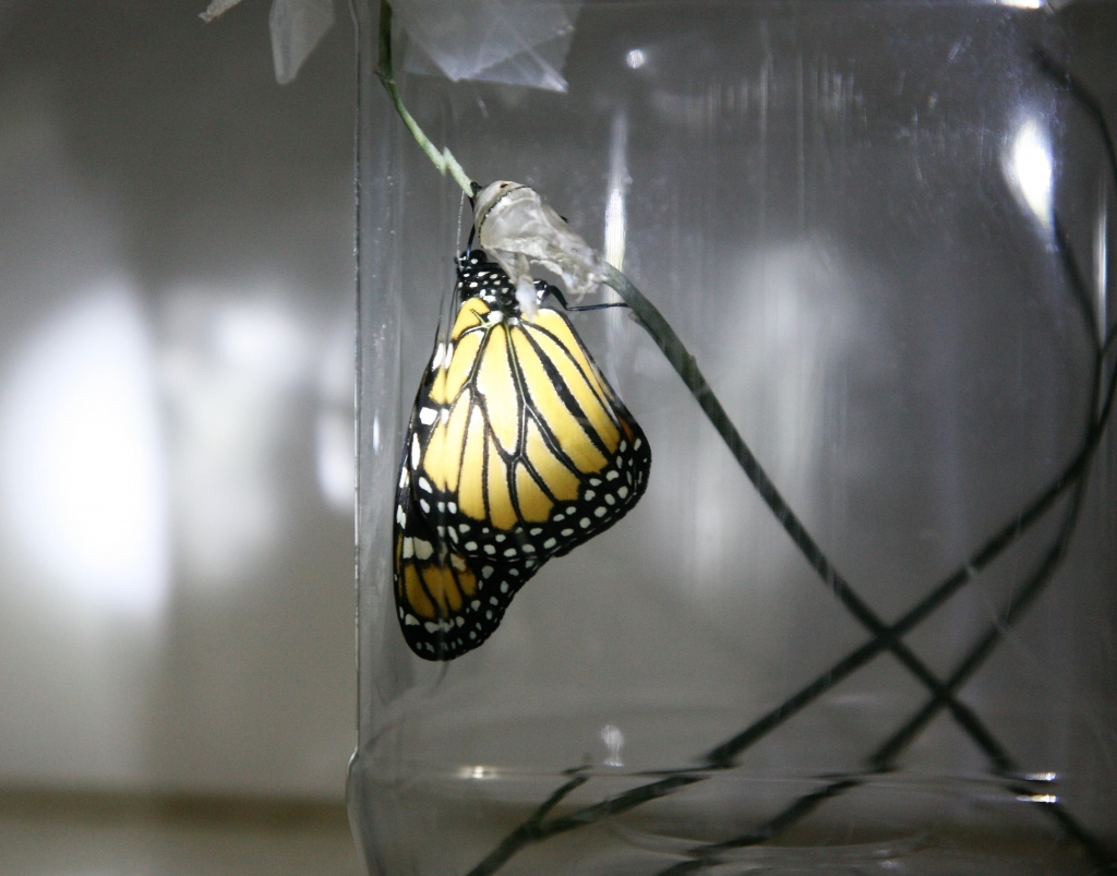 翅を乾かすモナコ蝶2