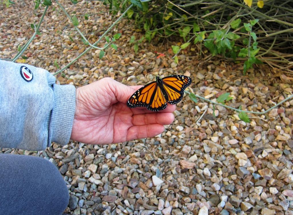 チュパロサの枝に移る蝶