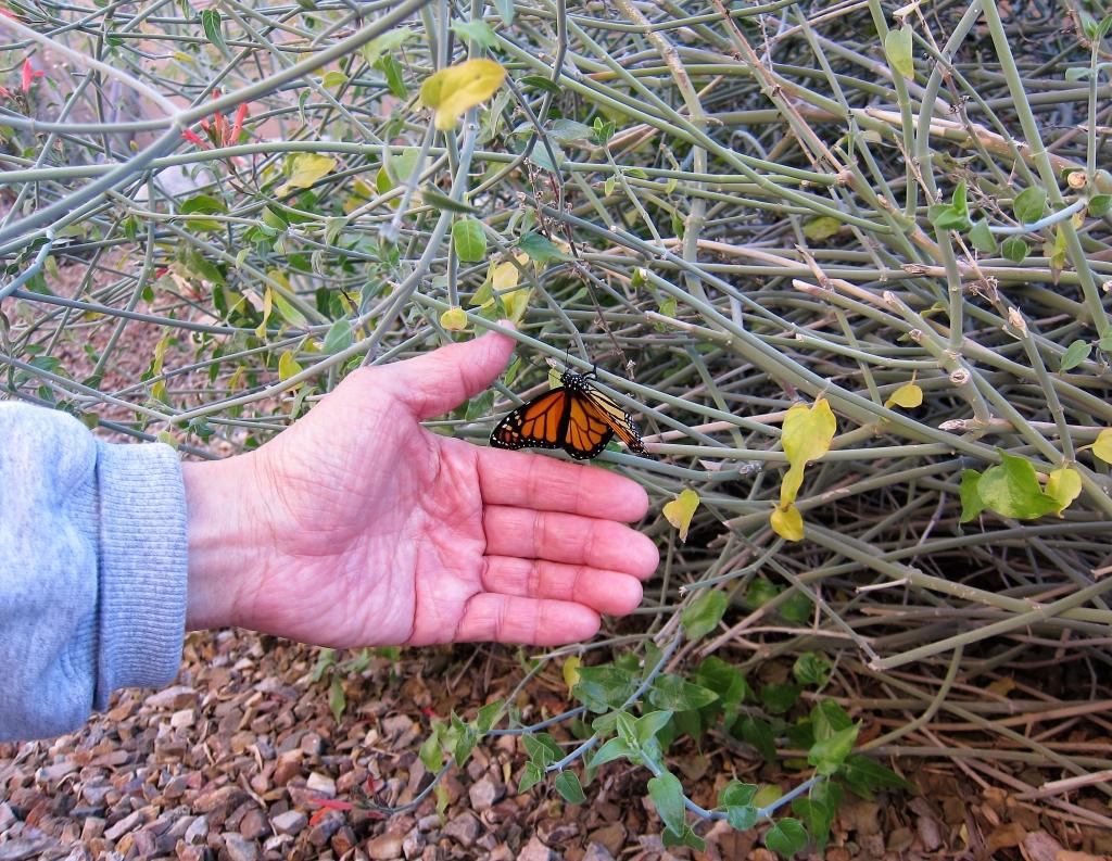 チュパロサの枝を登る蝶