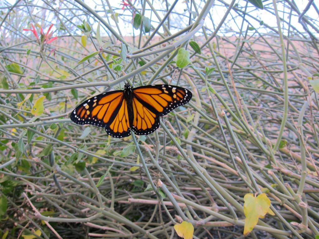 飛び立つ準備をする蝶