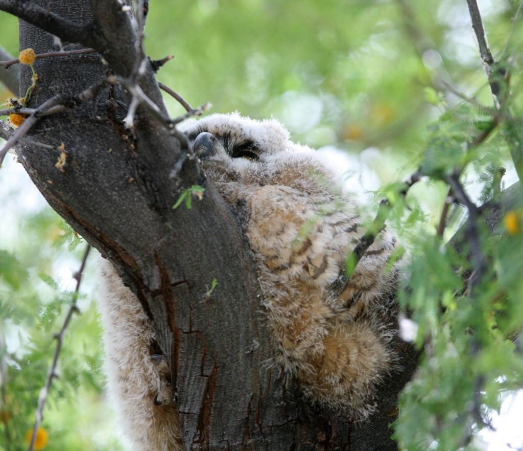 木に寄り掛るようにして眠る雛