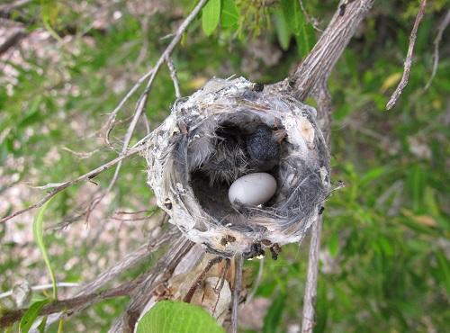 雛1羽と卵 2