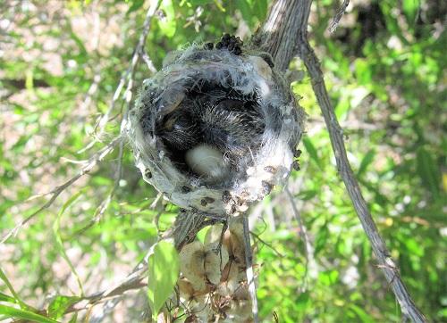 雛1羽と卵 3