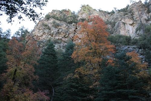 Ramsey Canyon 岩壁と紅葉