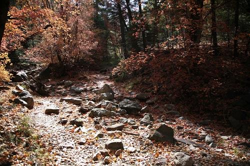 紅葉のコロナド森林Hamburg トレール