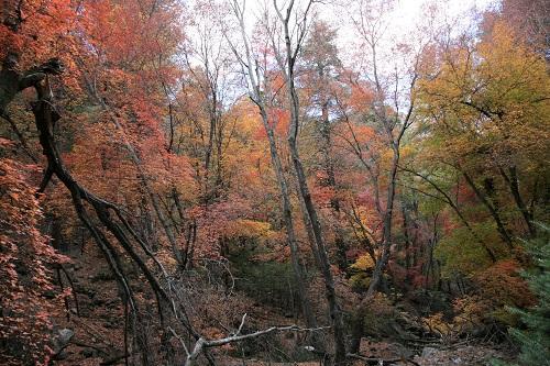 Ramsey,Hambrg Trail の紅葉 1