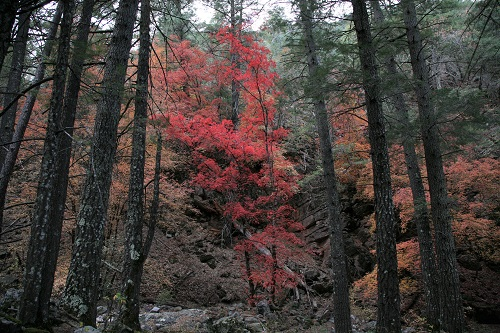 Ramsey,Humburg Trail の紅葉 2
