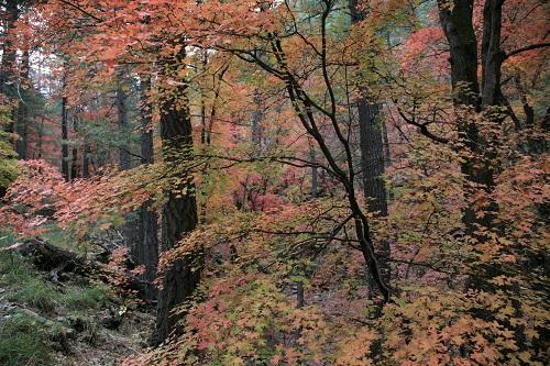 Ramsay,Hamburg Trail の紅葉 3