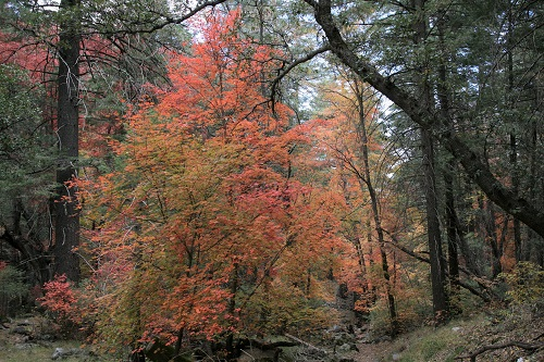 Ramsey,Hambrg Trail の紅葉 4