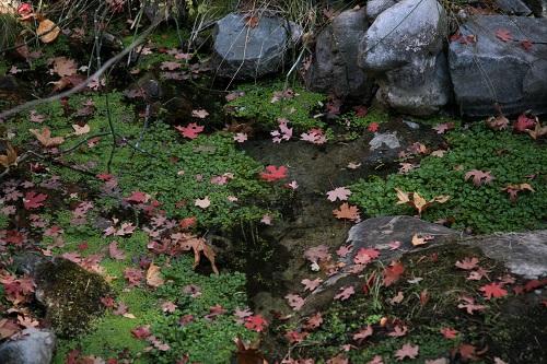 渓流の淀みに浮かぶ枯葉