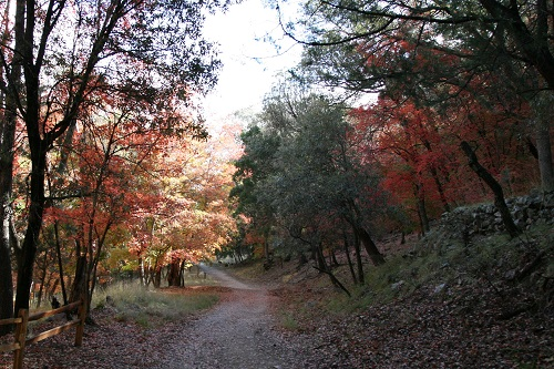 Ramsey Canyon Trail 入口の紅葉