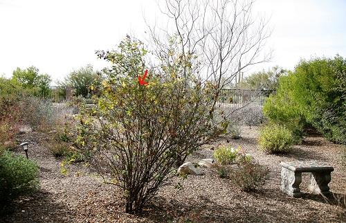 巣のある木と庭