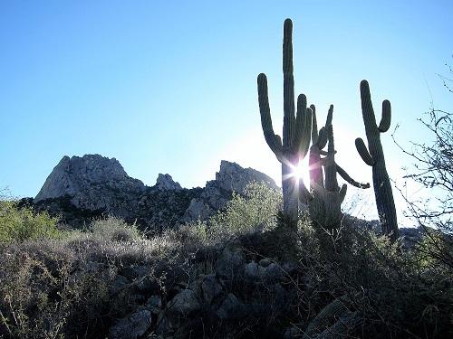 朝日と Saguaro