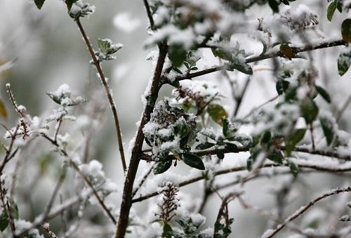 雪降るなか巣の雛