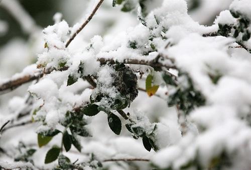 雪で倒れた枝と巣