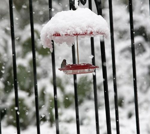 雪の中のフィーダーとハチドリ