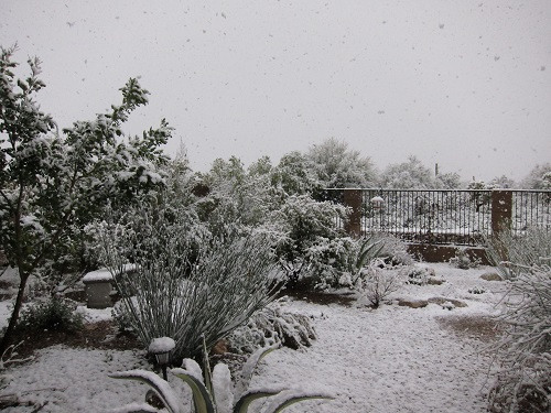 雪降る庭の風景