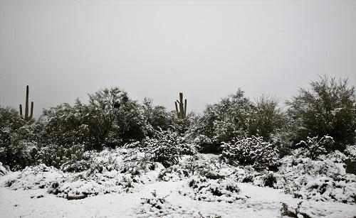 庭から見るプリザーブ雪景色