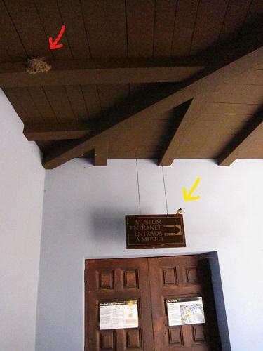 ミュージアム看板とツバメ及び巣