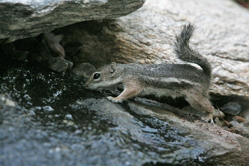 リス滝の水飲む