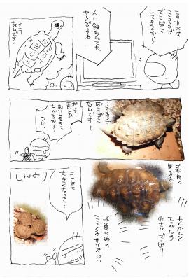 イシガメ04.png