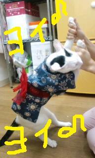 ピッコロ浴衣・盆踊り