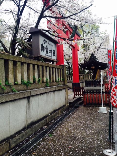 御霊神社東側の桜(2015/4/3)