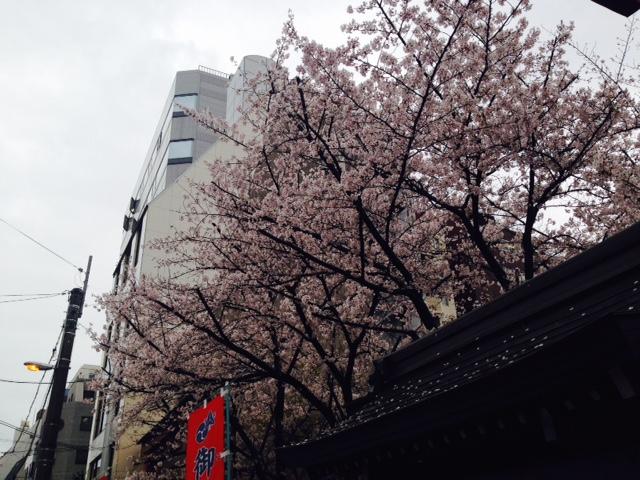 御霊神社東側の桜(2015/4/3