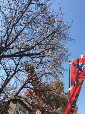 御霊神社の桜(2017/4/3)
