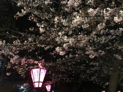 高津神社の桜(2017/4/4)