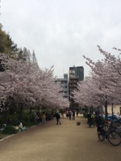 靭公園の桜(2017/4/10)