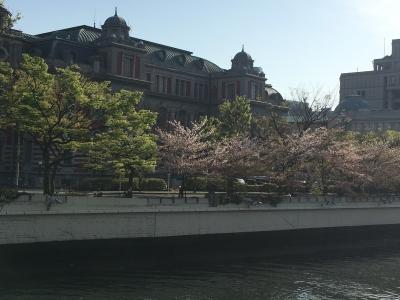 中之島の桜(2017/4/16)