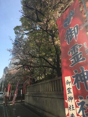 御霊神社の桜(2017/4/16)