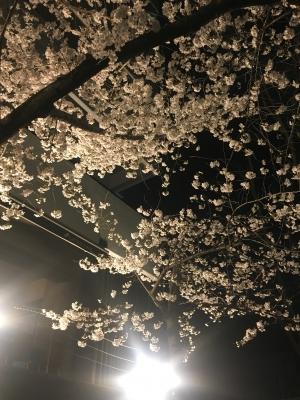 高津神社の夜桜(2018/3/24)