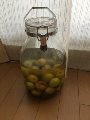 赤霧島とココナッツシュガー&蜂蜜で梅酒の仕込み