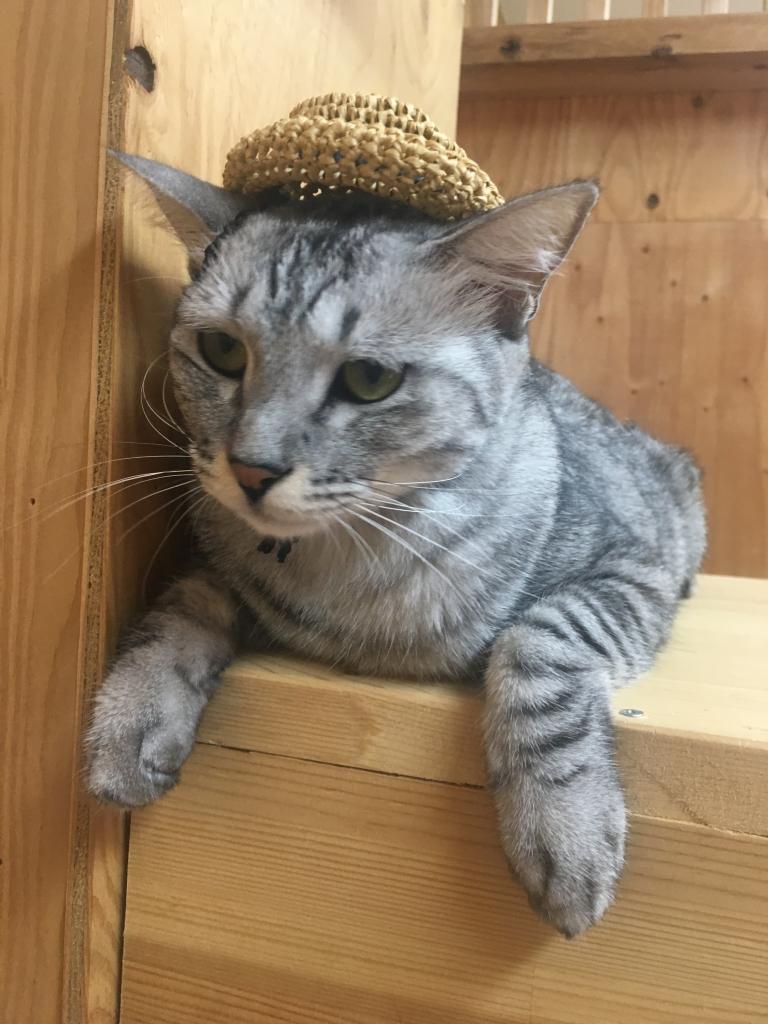 ねこに帽子