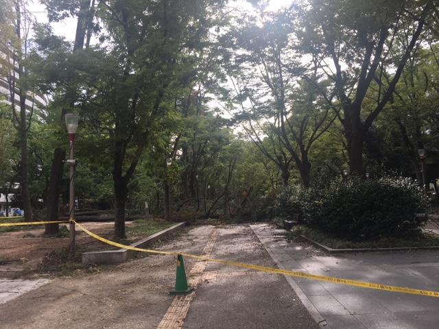 台風21号後の靭公園