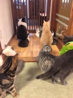 猫の時間きた本店