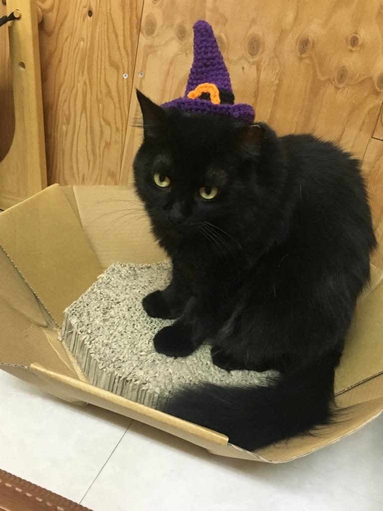 リアルハロウィンの黒猫さん