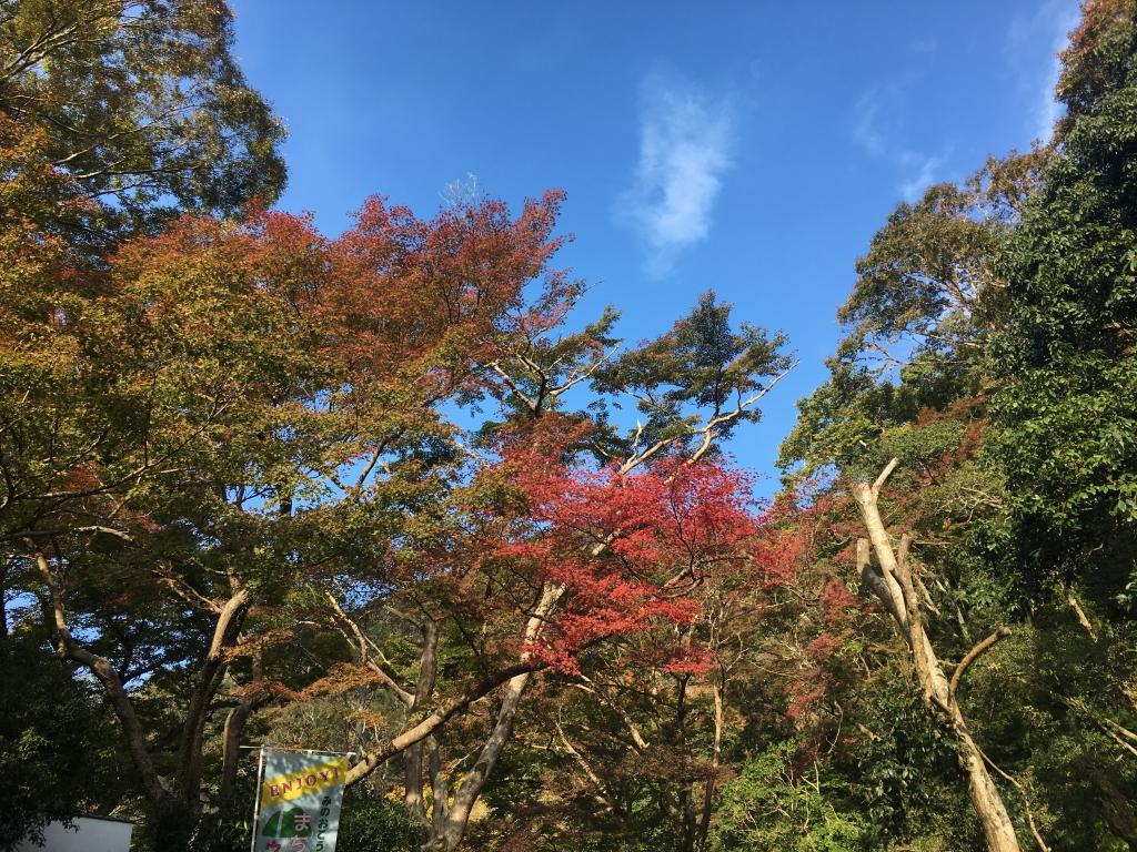 箕面ハイキング(2018/11/4