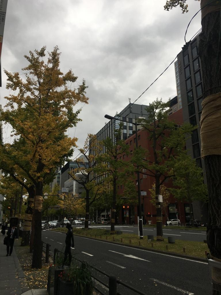 御堂筋の銀杏(2018/11/16)