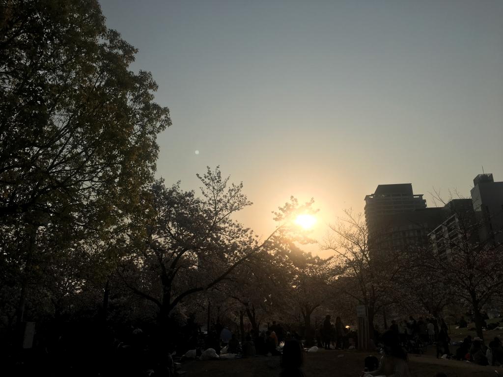 扇町公園の桜(2019/4/6)