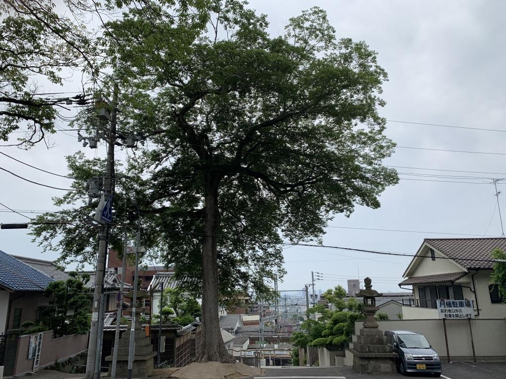 枚岡神社 鳥居の前の階段より。