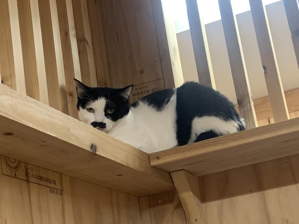 保護猫カフェ@北心斎橋【いえたんJ】