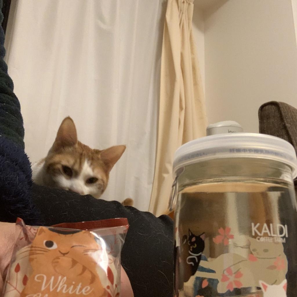 猫の日にチャロとカルディ撮影会。